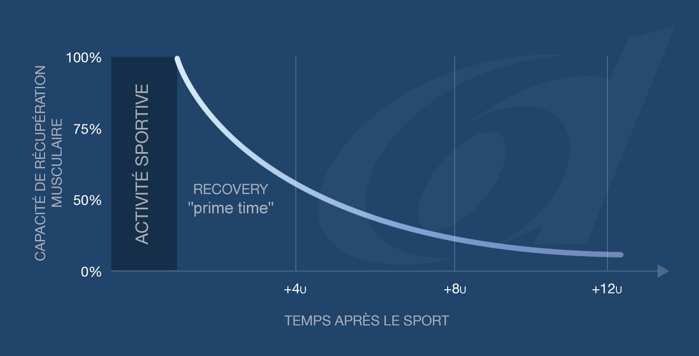 The potential of skeletal muscle to recover: prime time immediately after exercise